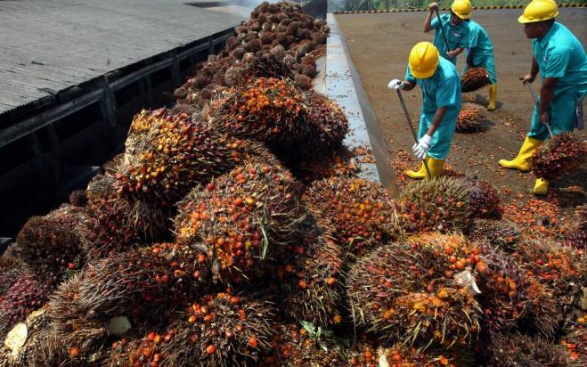 Manfaat Dalam Mengkonsumsi Minyak Sayur Hasil Produksi Lokal
